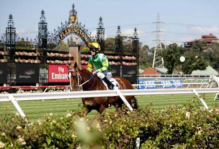 Melbourne Cup omen bets