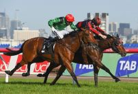 Cairns Betting Tips & Preview