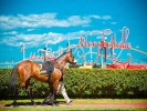 Morphetville Betting Preview | Horse Racing Tips