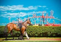 Morphettville Betting Tips & Preview