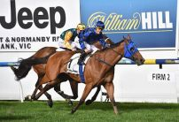 Terang Betting Preview | Horse Racing Tips