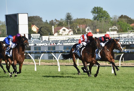 Gilmore - Mornington and Canterbury Tips