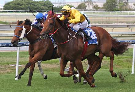 Doomben Racing Preview
