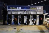 Greyhound Racing: The Dishlickers are gone