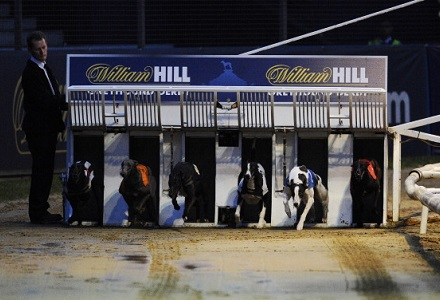 Greyhound Derby Quarter-Finals Betting Preview