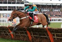 Cole Harden All the Rage for Stayers Hurdle