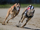 Nathan Hunt greyhounds: New investment in the sport a huge positive