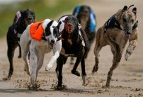 Nathan Hunt greyhounds: Kennel in fine form with more hopes at Romford