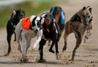 Nathan Hunt greyhounds: Grays Cup Winner my best chance of a winner at Romford on Friday night