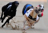 Nathan Hunt greyhounds: In flying form at Romford with more runners this week