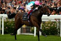 Calyx installed as favourite for 2000 Guineas following Royal Ascot victory