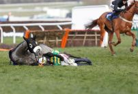 County Hurdle favourite Campeador ruled out of Cheltenham