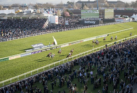 Win or lose – we're on the booze: Cheltenham punters say they'll drink over nine pints each at famous Festival
