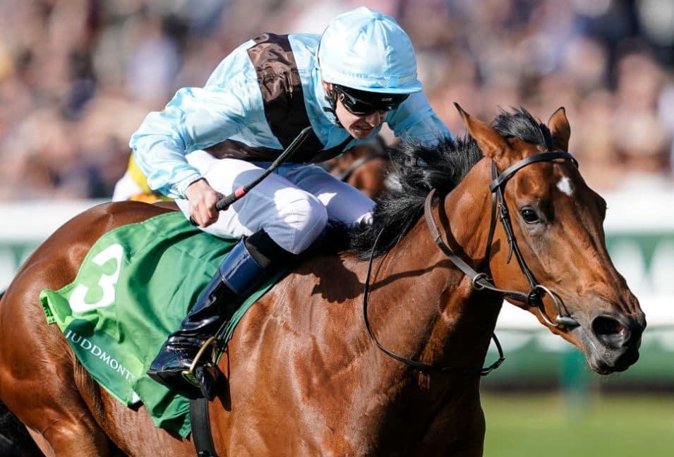 Oddschecker 1000 guineas betting best offshore sports betting sites