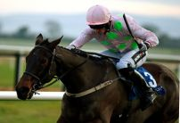 Getabird the punters pick in Moscow Flyer Novice Hurdle