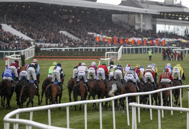 The three most backed horses at Punchestown today | Oddschecker