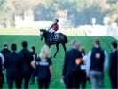 Roaring Lion's odds crash for one last hurrah at the Breeders Cup before retirement