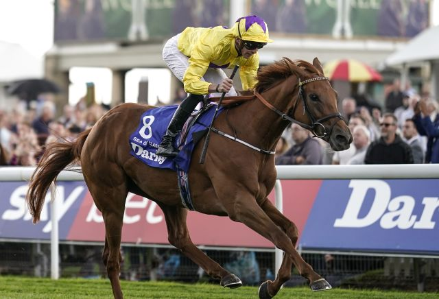 Image result for sea of class yorkshire oaks