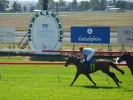 Muswellbrook (Sunday) Betting Tips & Preview