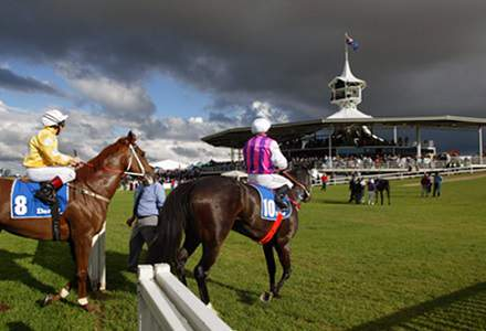 Betting Tips for Geelong and Hawkesbury