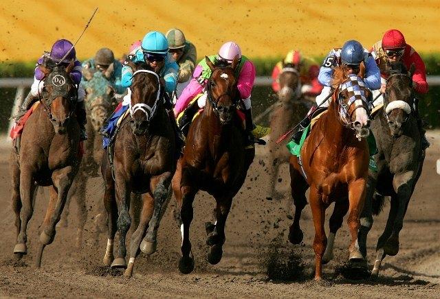 Saturday's Money Horse through oddschecker