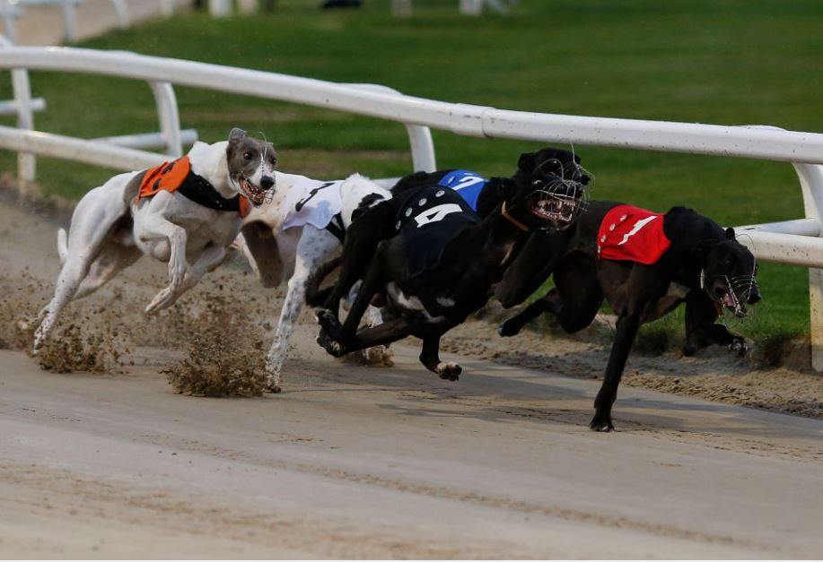 Tuesday's Money Dog through Oddschecker