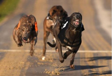 Friday's Money Dog through Oddschecker