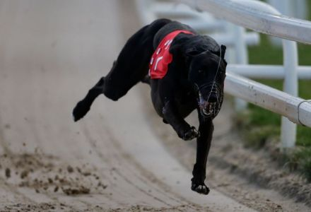 Saturday's Money Dog through Oddschecker