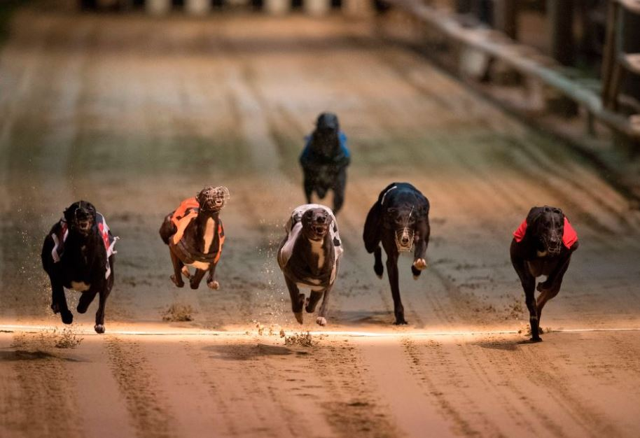 Cowley dog racing betting is online sports betting legal in australia