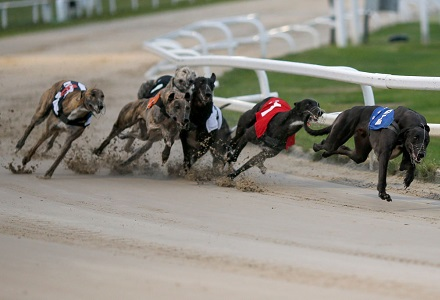 Crayford Greyhound One Of The Most Popular Bets On Oddschecker Oddschecker