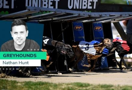 Nathan Hunt greyhounds: Disappointment in Puppy Cup but chances this weekend
