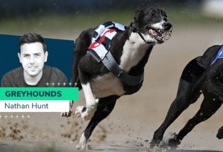 Nathan Hunt's best weekend greyhound chances