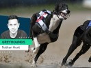 Nathan Hunt's best weekend greyhound chances