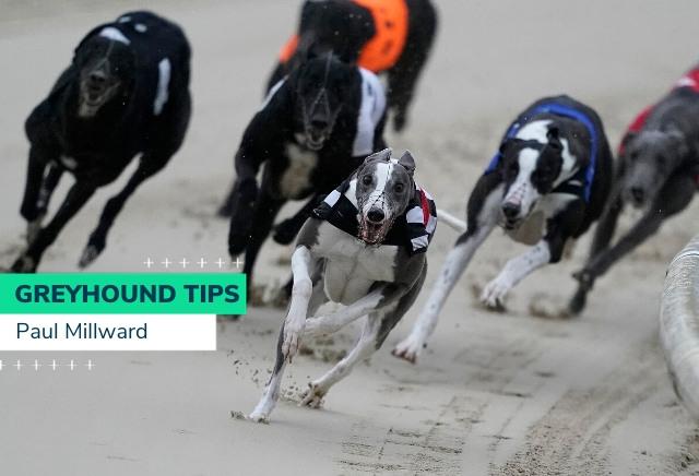 Monday Greyhound Racing Tips