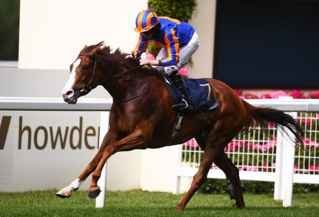 King George: Tips, Runners & Prediction
