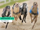 Sunday Greyhound Racing Tips