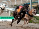 Monday Greyhound Racing Tips
