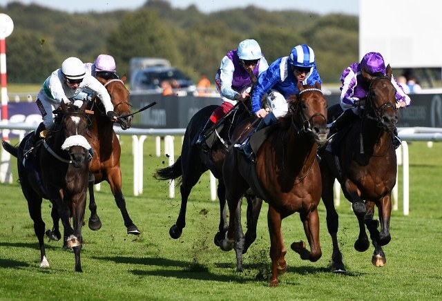 Five Flat Horses to Follow