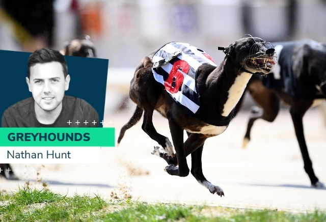 Nathan Hunt greyhounds: Weekend runners and Essex Vase Tip