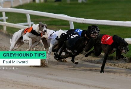 Paul Millward Greyhound Derby Tips