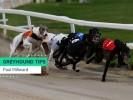 Wednesday Greyhound Racing Tips