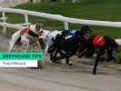 Friday Greyhound Racing Tips
