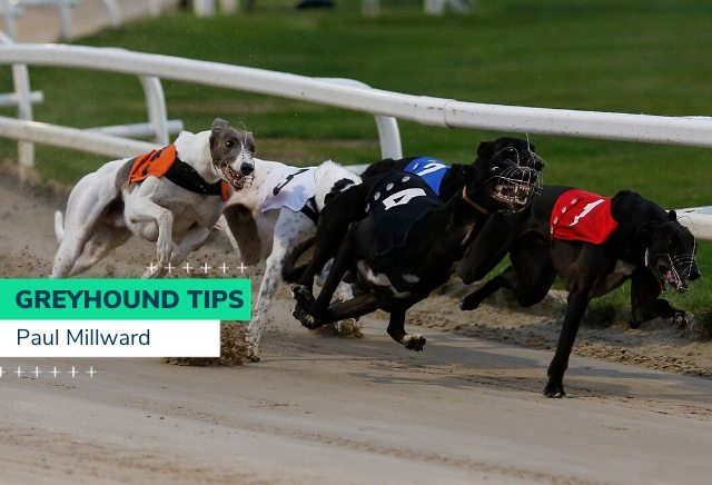 Saturday Greyhound Racing Tips