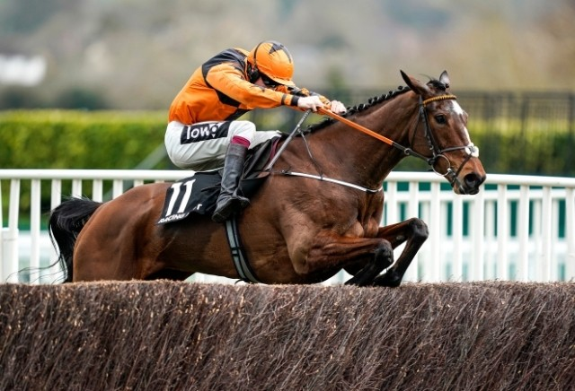 Put The Kettle On cut for Champion Chase following Shloer Chase victory