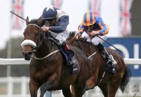 QIPCO Champions Day Betting Trends