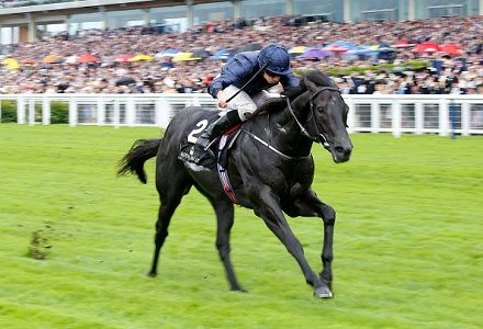 Caravaggio all the rage for Commonwealth Cup