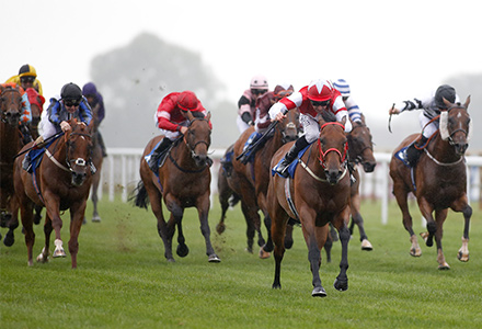 Money Horse: Tuesday's Most Backed Horse
