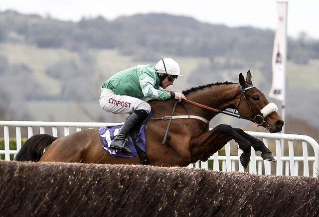 Quarter of all Gold Cup ante-post punts in peril following Presenting Percy news