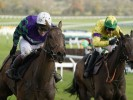 Thyme Hill cut for novice hurdles at Cheltenham Festival after November Meeting success