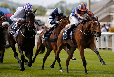 Money Horse: Sunday's Most Backed Horse